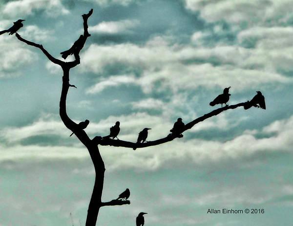 Silhoutte Photograph - Hitchcocks Birds by Allan Einhorn
