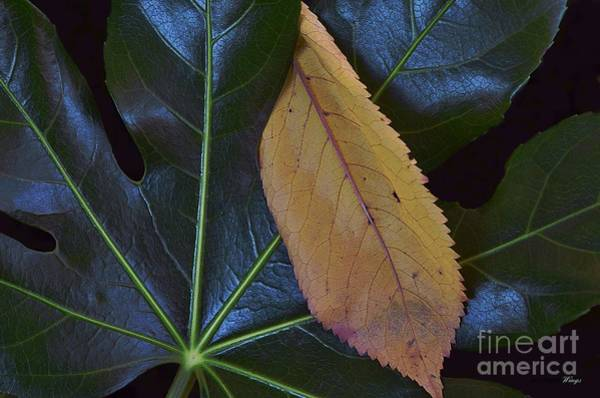 Photograph - Hitchhiker by Abbie Shores