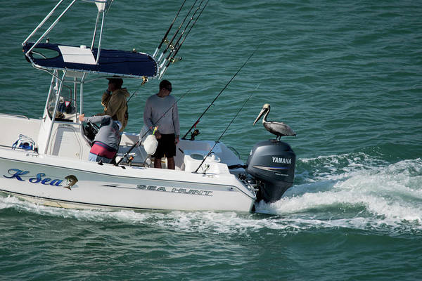 Outboard Photograph - Hitching A Ride, Port Canaveral, Flordia by Wayne Higgs