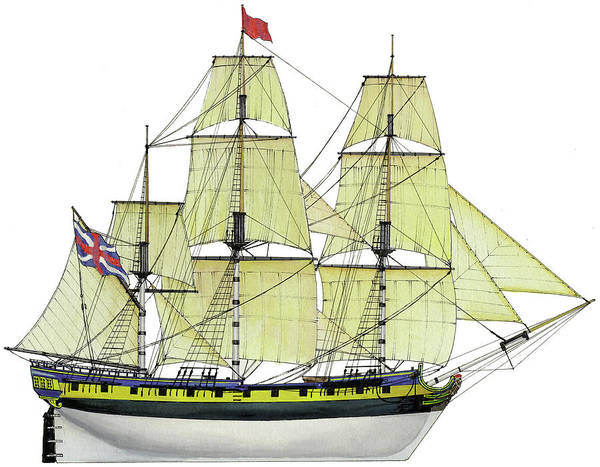 Wall Art - Painting - Hms Rose by The Collectioner