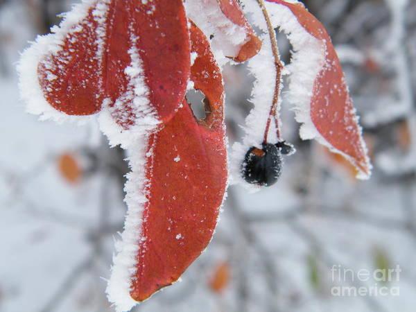Photograph - Hoar Frost by Ann E Robson