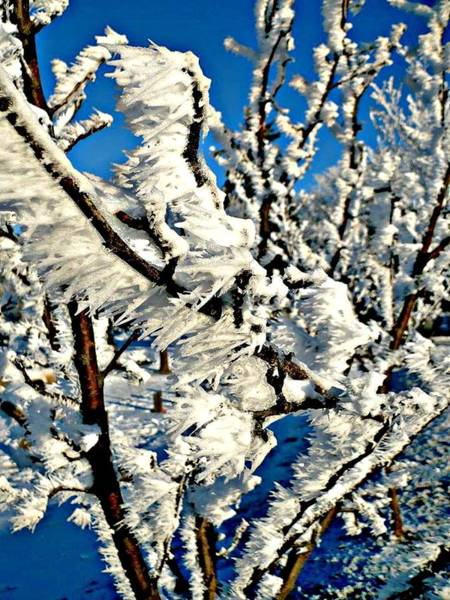 Photograph - Hoar Frost by 'REA' Gallery