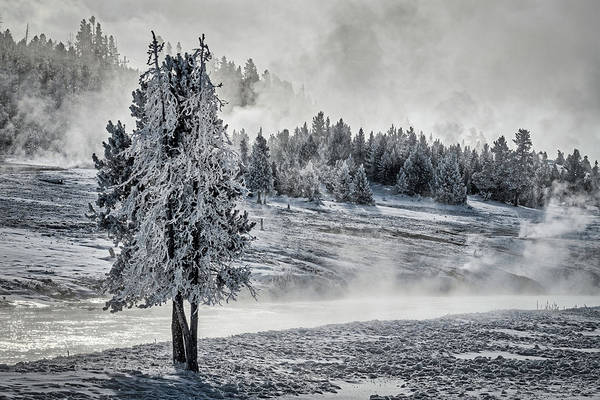 Photograph - Hoarfrost And Thermal Steam - Yellowstone by Stuart Litoff