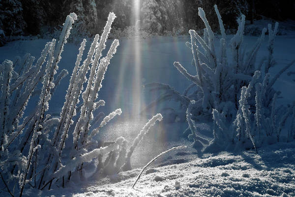 Photograph - Hoarfrost Light  by Wes and Dotty Weber