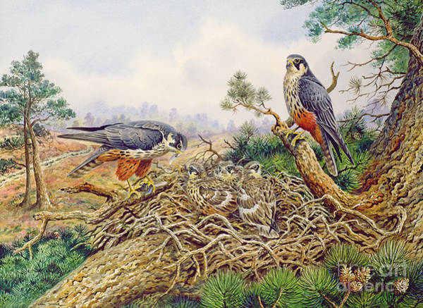 Wall Art - Painting - Hobbys At Their Nest by Carl Donner