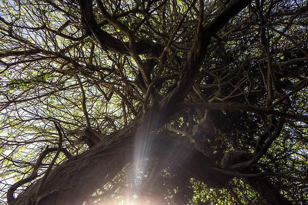 Photograph - Hofi Pastor Dream Forrest by For Ninety One Days