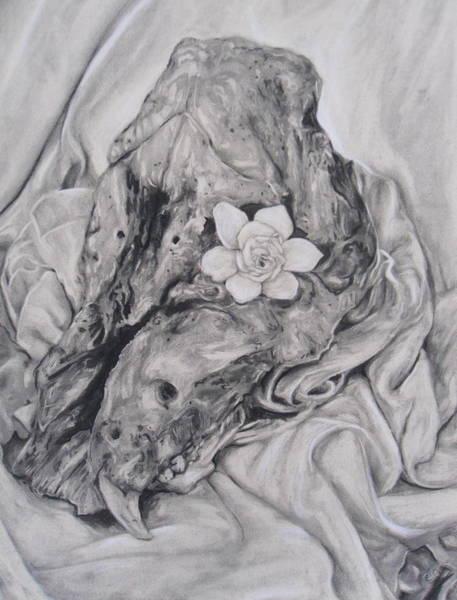 Wa Drawing - Hog Skull And Gardenia by Adrienne Martino