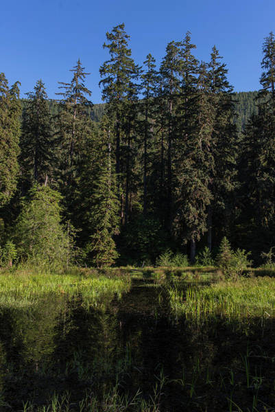 Photograph - Hoh Rain Forest Reflection by Robert Potts