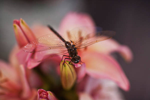 Dragonflies Photograph - Holding On by Mike Reid