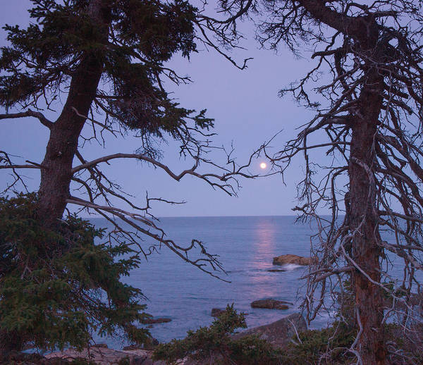 Photograph - Holding On To The Moon by Darylann Leonard Photography