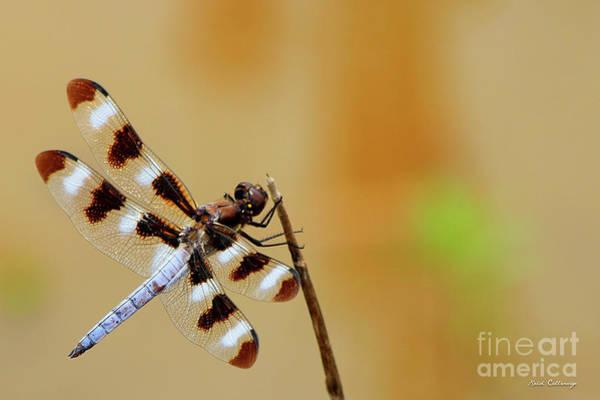 Photograph - Holding Fast Dragonfly Farm Pond Art by Reid Callaway