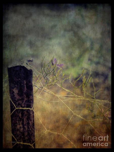 Photograph - Holding Up by Elaine Teague