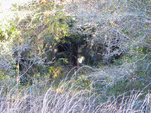 Florida Wall Art - Photograph - Hole Through The Trees by Ric Schafer