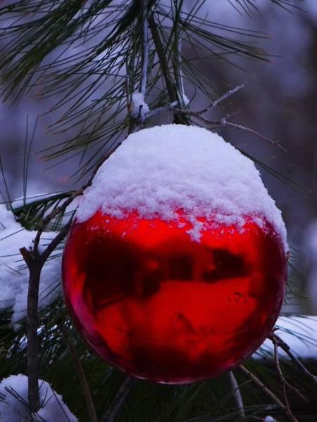 Photograph - Holiday Reflection by Jenny Regan
