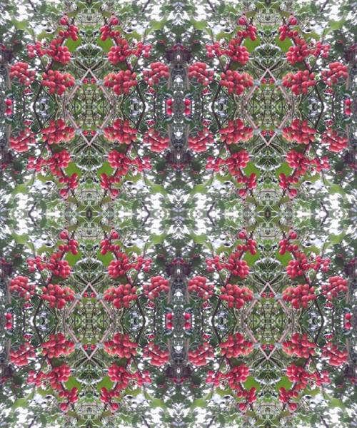 Photograph - Holly Berry 802 Multi Fractal by Julia Woodman