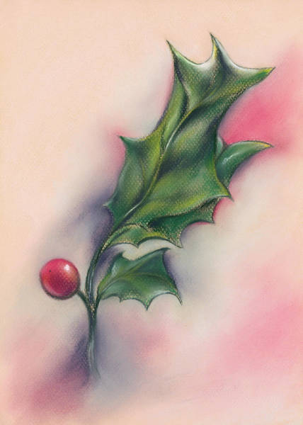 Drawing - Holly Berry And Leaves by MM Anderson