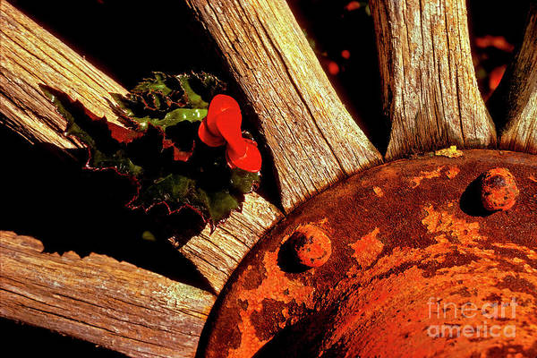 Photograph - Holly In Wheel by Paul W Faust -  Impressions of Light