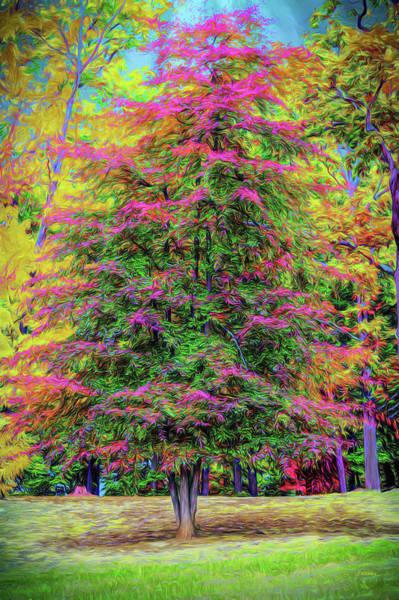 Photograph - Holly Jolly Tree by John M Bailey