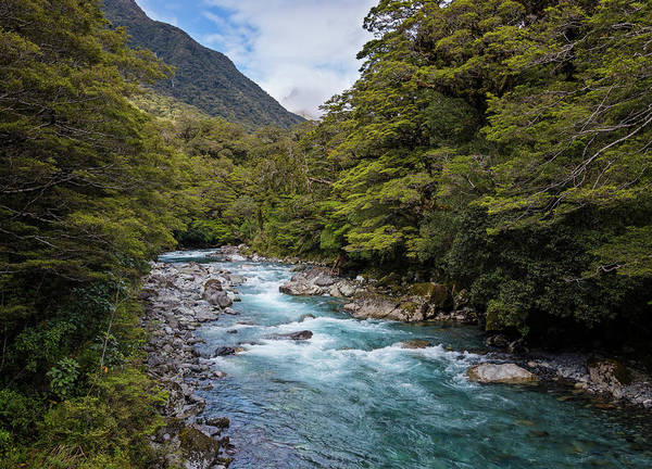 Photograph - Hollyford River New Zealand by Joan Carroll