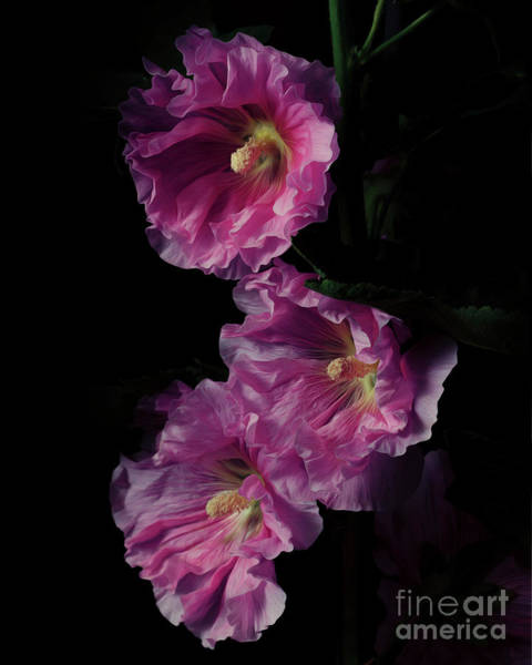 Photograph - Hollyhock 1 by Tim Wemple