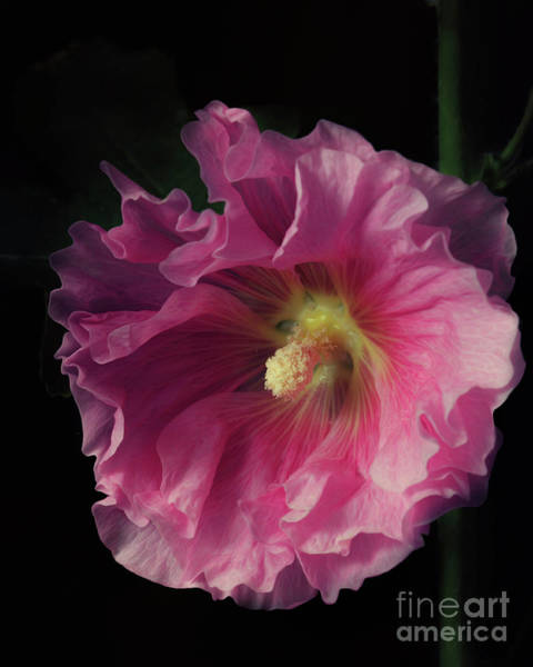 Photograph - Hollyhock 2 by Tim Wemple