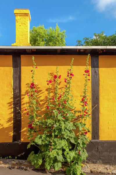 Wall Art - Photograph - Hollyhocks In Gudhjem by W Chris Fooshee
