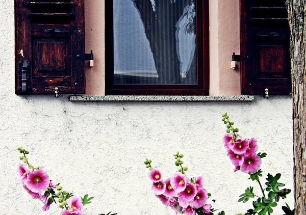 Hollyhocks In Schierstein 2 Art Print