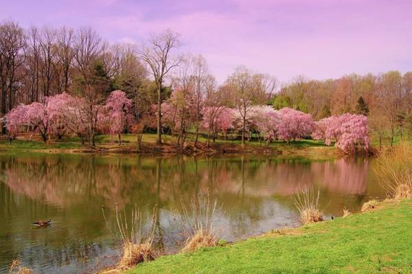 Photograph - Holmdel Park In Spring by Angie Tirado
