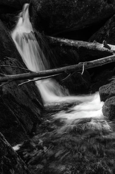 Photograph - Holtemme, Harz - Monochrome Version by Andreas Levi