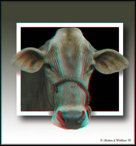 Anaglyph Photograph - Holy Cow - Use Red-cyan 3d Glasses by Brian Wallace