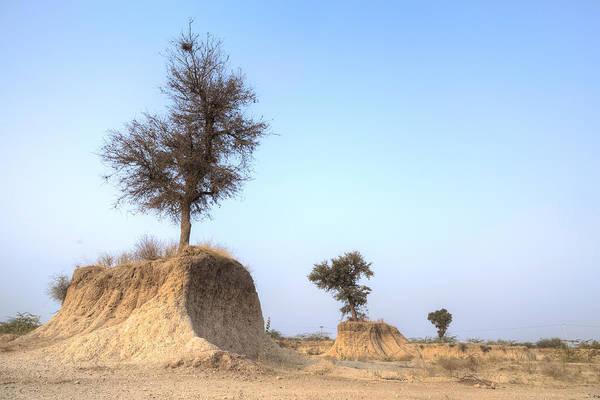 Holy City Photograph - Holy Trees by Joana Kruse