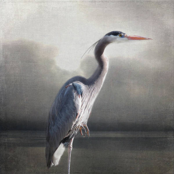 Photograph - Homage To Audubon by Sally Banfill