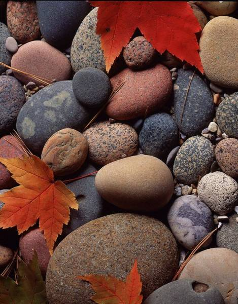Autumn Leaves Photograph - Homage To Eliot II by Mark W Hutchison