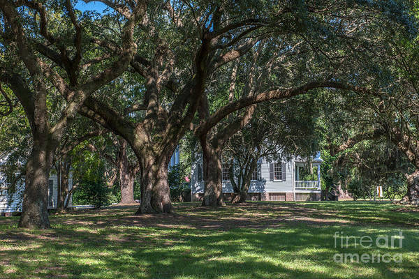 Photograph - Mcleod Home Through The Oaks by Dale Powell