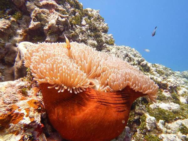 Photograph - Home Of The Clown Fish by Michael Scott