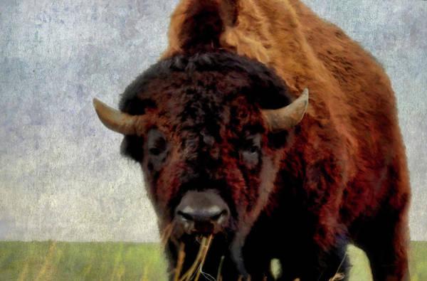 Colorado Wildlife Digital Art - Home On The Range 2 by Ernie Echols