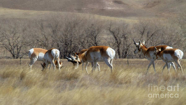 Photograph - Home On The Range by Jim Garrison
