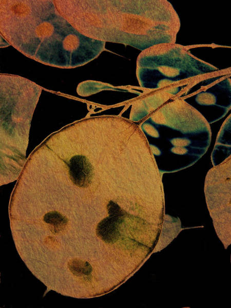 Photograph - Honesty Iv by Char Szabo-Perricelli
