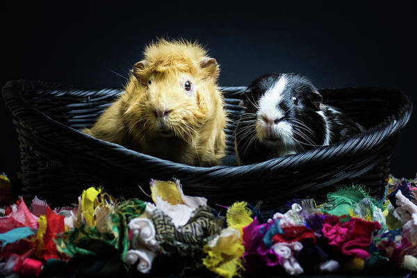 Photograph - Honey And Kit by Jeanette Fellows