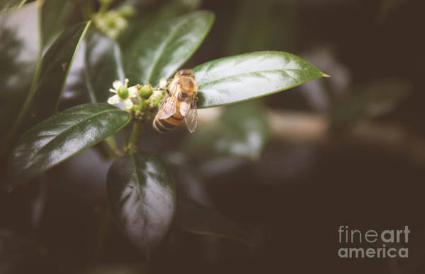 Photograph - Honey Bee 3 by Andrea Anderegg