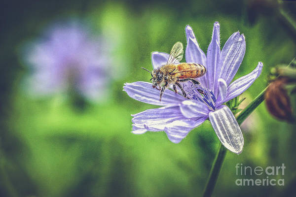 Photograph - Honey Bee And Flower by Eleanor Abramson