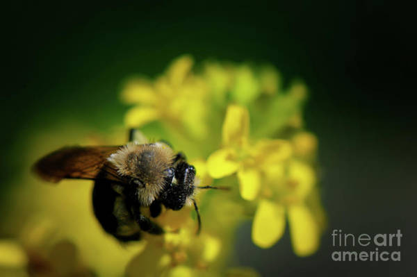 Photograph - Honey Bee by Lois Bryan