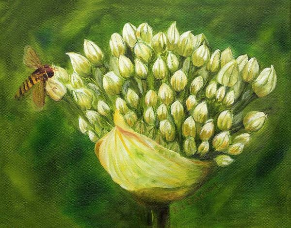 Wall Art - Photograph - Honey Bee On Onion Flower by Iris Richardson
