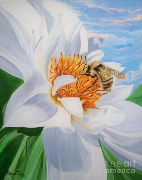 Painting - Flygende Lammet Productions     Honey Bee On White Flower by Sigrid Tune