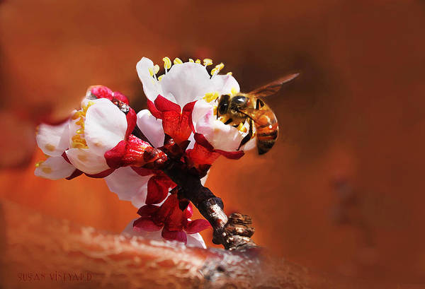Photograph - Honey Bee by Susan Vineyard