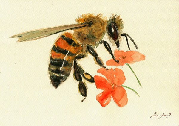 Insect Wall Art - Painting - Honey Bee Watercolor Painting by Juan  Bosco