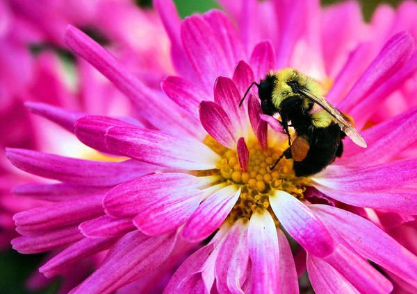Photograph - Honey Sacs by Kristin Elmquist