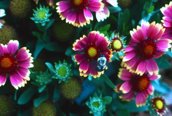 Honeybee And Flowers Art Print
