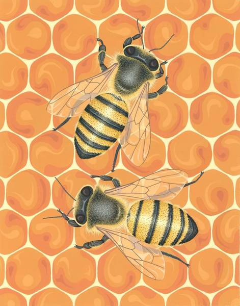 Wall Art - Painting - Honeybees by Nathan Marcy
