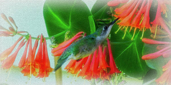 Caprifoliaceae Photograph - Honeysuckle Hummer by Leslie Montgomery